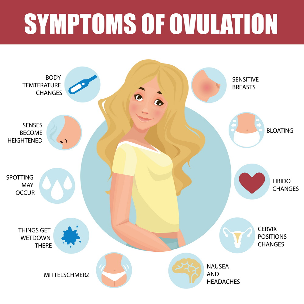 What Is Ovulation Symptoms, Tracking, And Disorders-4211
