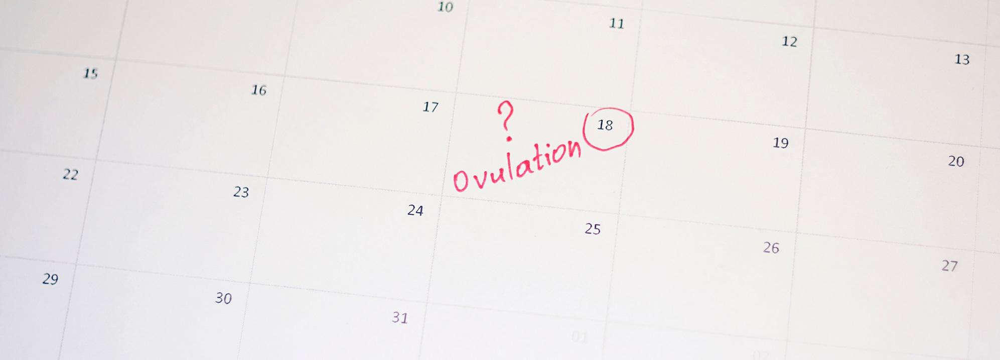 Ovulation calendar and pregnancy wheel | ovulation predictor.