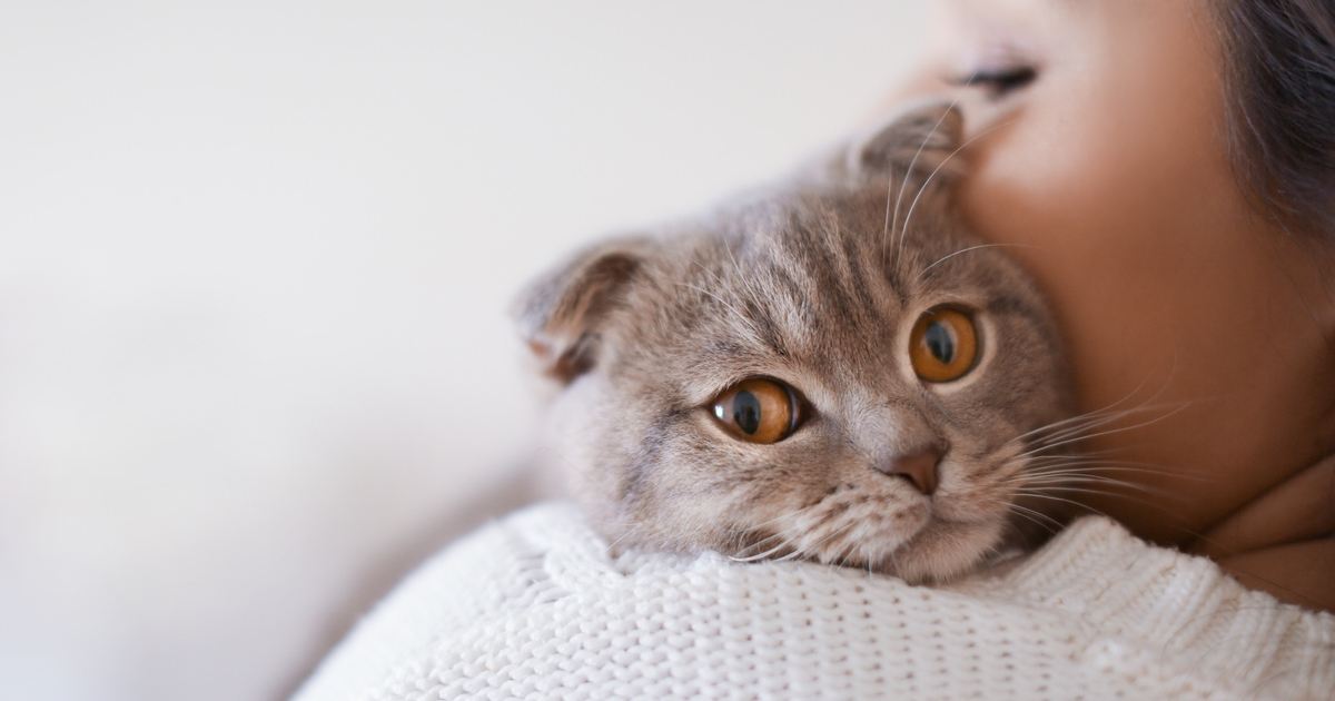 Can Cats Sense Pregnancy Before You Know?