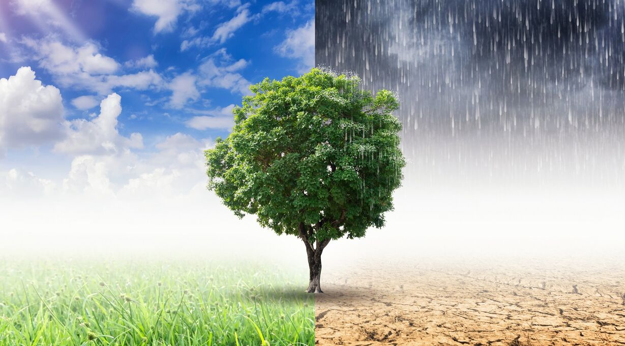 a tree under various weather conditions symbolizing hormone fluctuations during woman's monthly cycle
