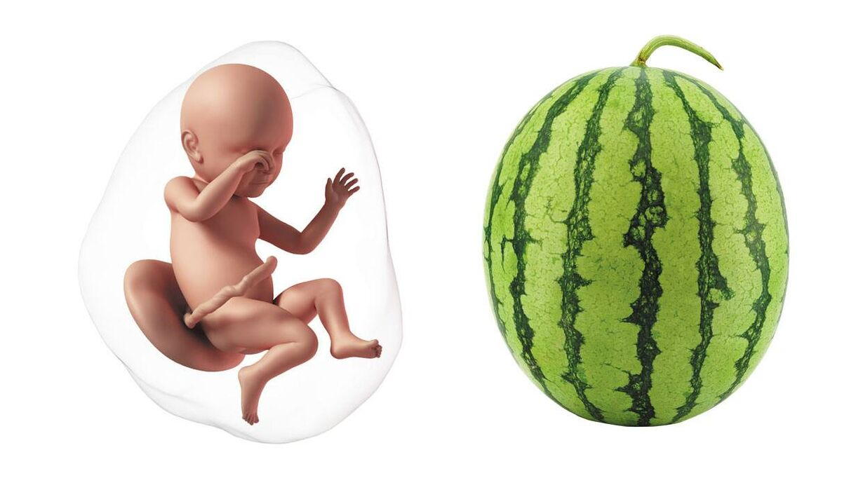 At 39 weeks pregnant, your baby is the size of a small watermelon
