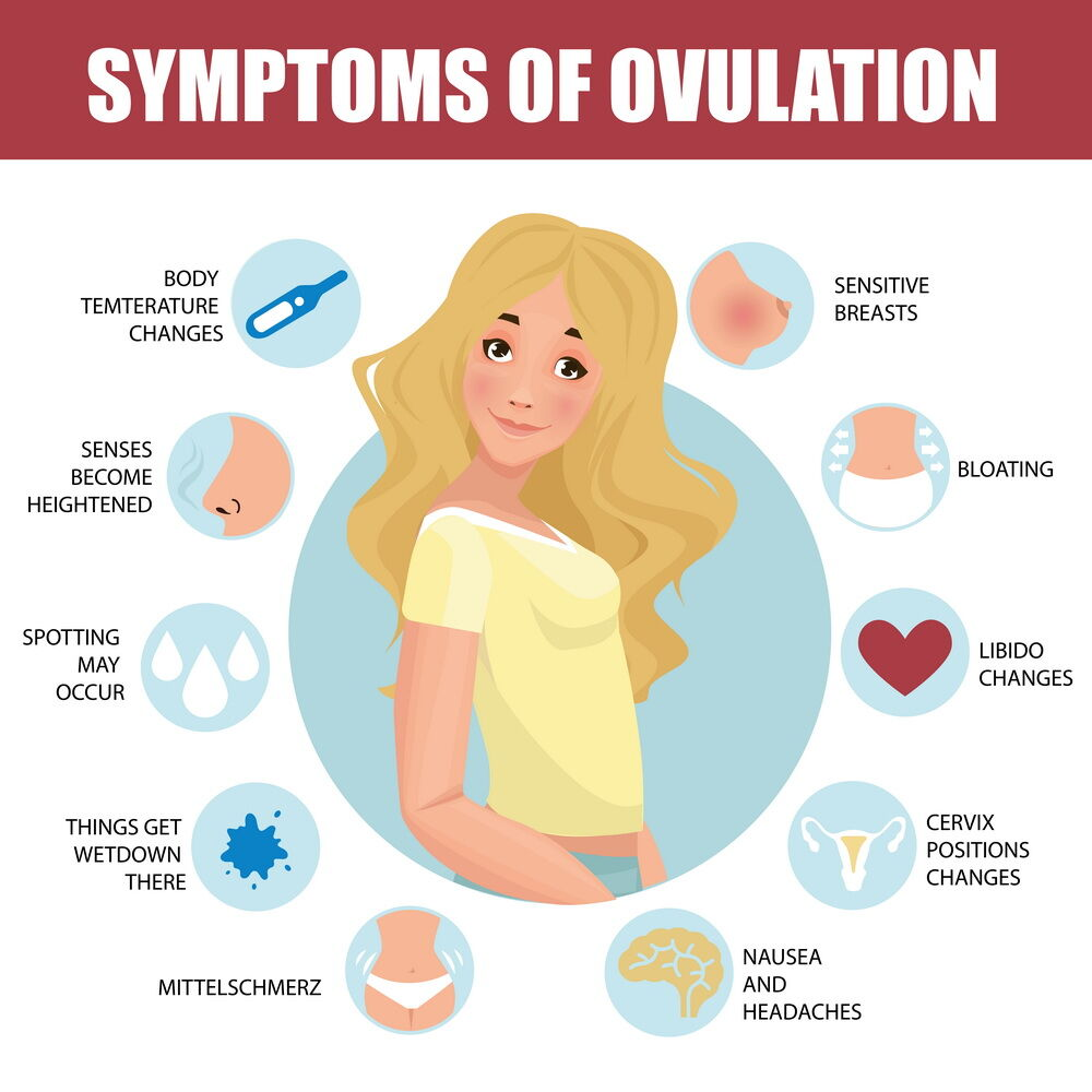 What Is Ovulation? Symptoms, Tracking, and Disorders
