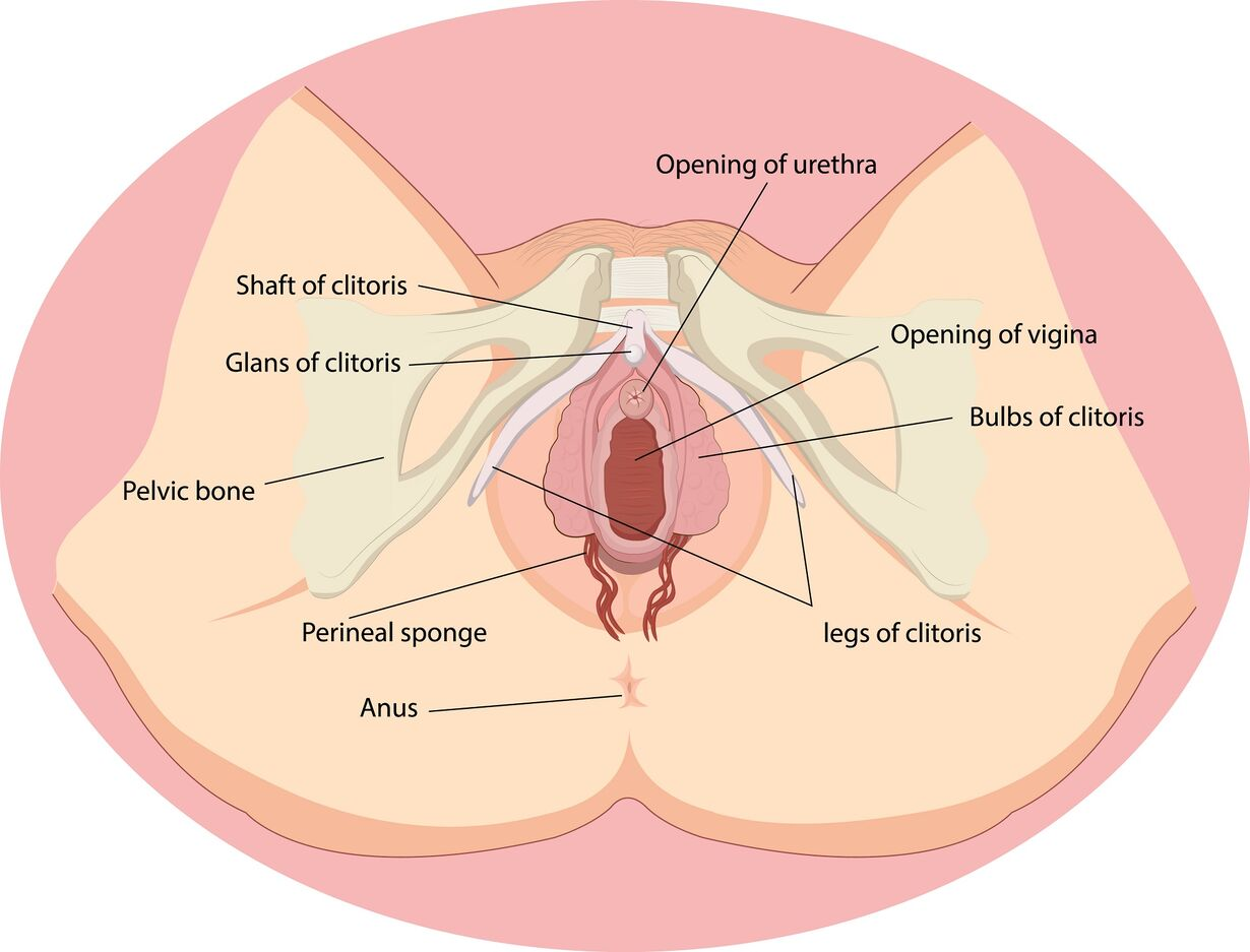 What Happens to Your Vagina After You Give Birth